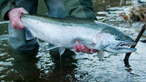 Steelhead Video Episodes